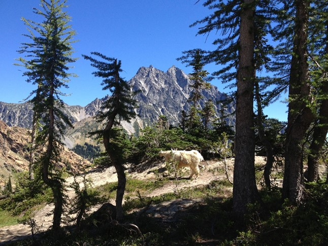 Mt. Stuart and some mountain goats