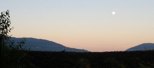 Dawn in July