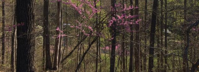 Kentucky Spring