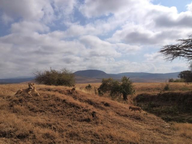 Ngorongoro Pride