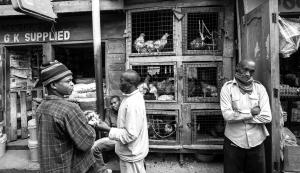 market chickens