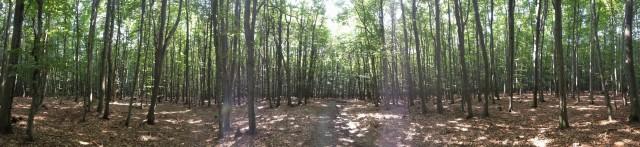 Slovakian Forest