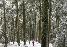 snow! photo by Luke Allen Humphrey